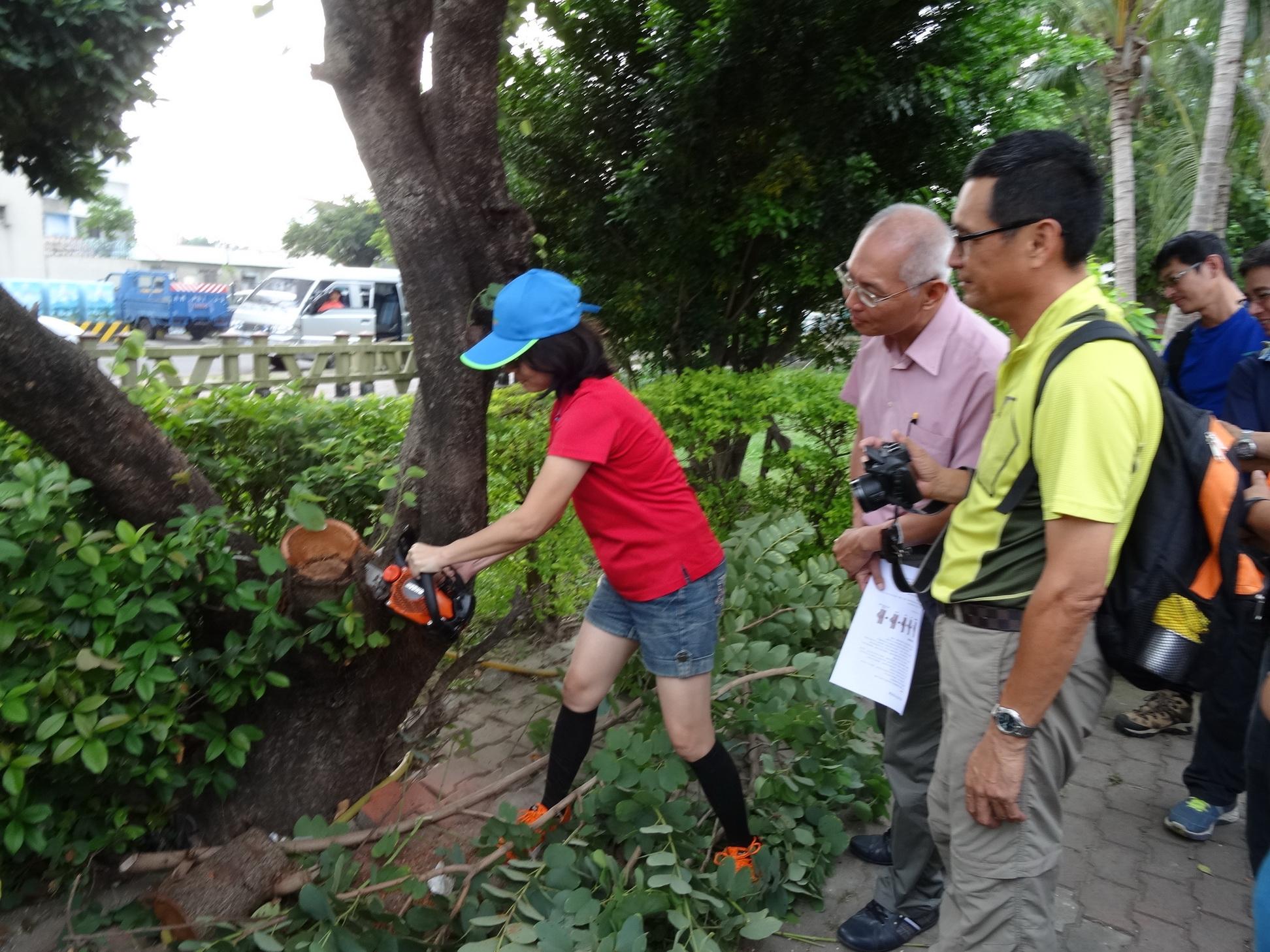社區環境好品質 樹木修剪當吉時