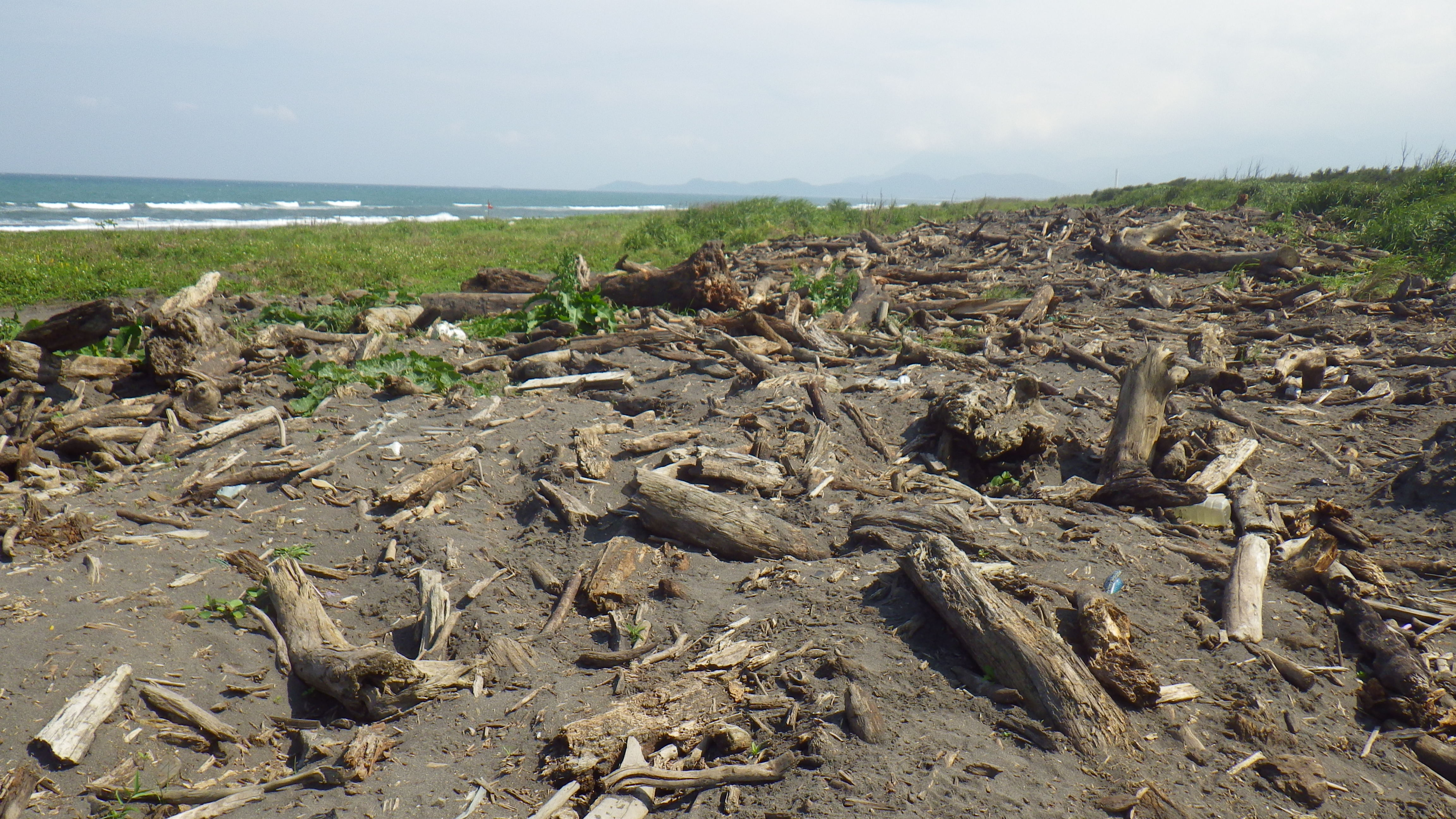 自然資源回收再利用,五結鄉漂流木臨時堆置場開放民眾撿拾