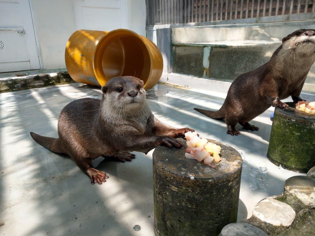 保育類野生動物飼養管理 應強化飼主責任及適切執法