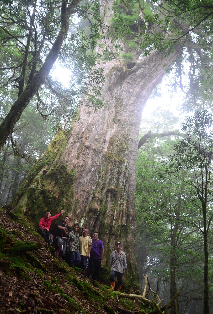 Giant Taiwan incense cedar was discovered while conducting surveys in a sample area.