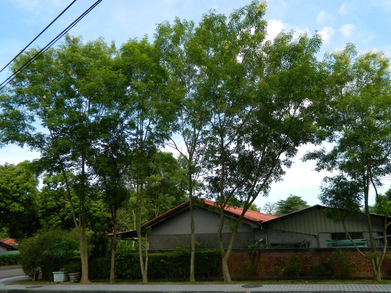 林內竹子開花 林管處願無償提供造林木讓承租人申請